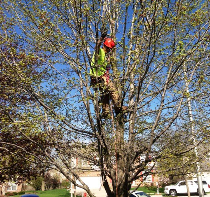Acres Tree Care