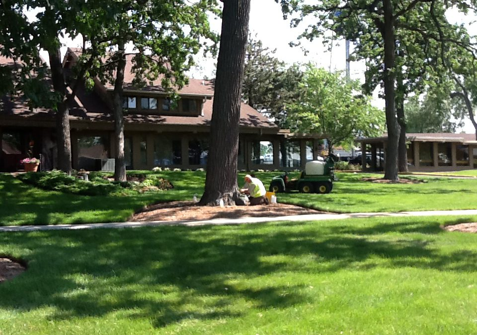 Acres Tree Care Treats Lake Lawn Resort Oak Trees
