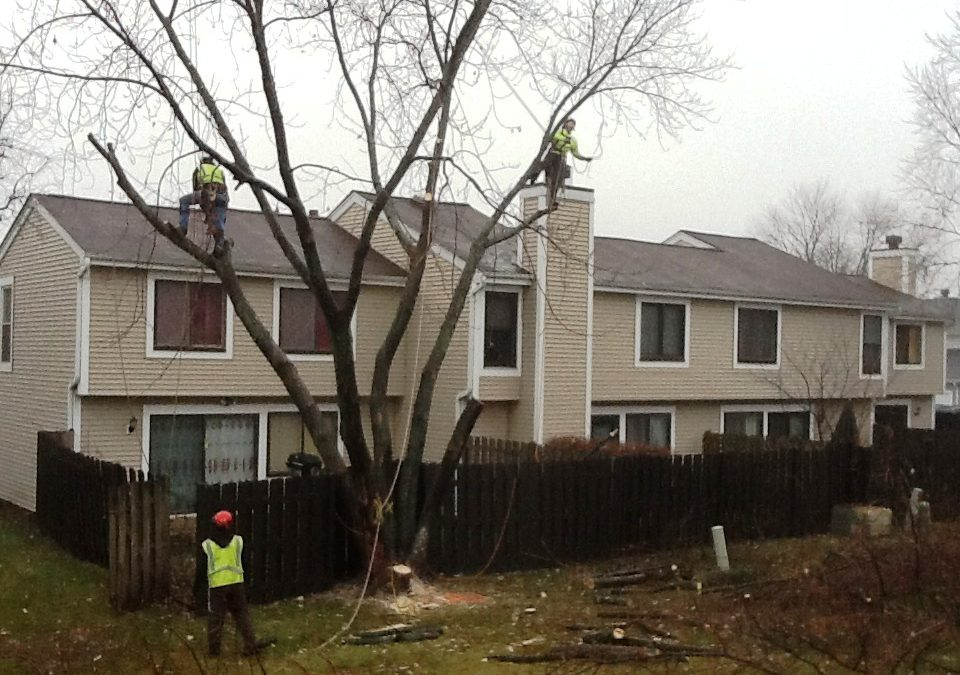 Safely Removing Hazard Trees In Town Home Association