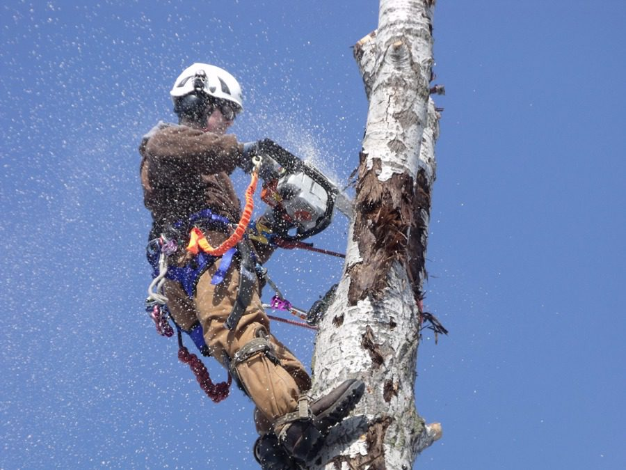 Acres Tree Care's #1 Goal = Safety First!