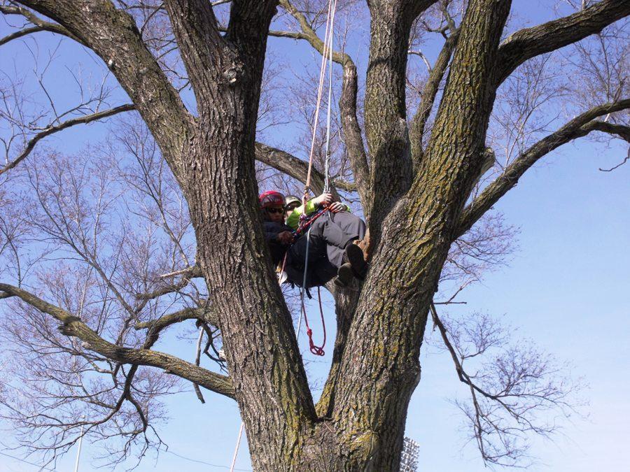 Acre Tree Care = Professional & Safe