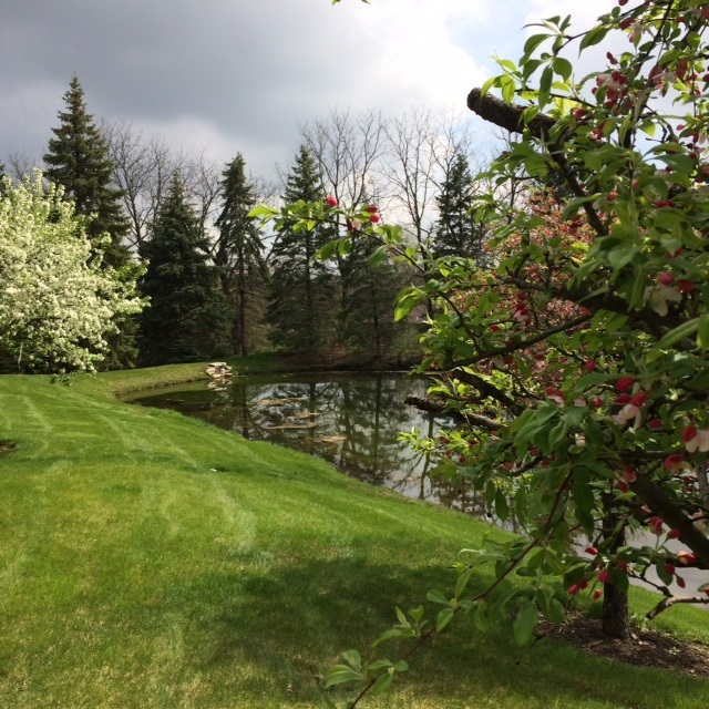 Beautiful Spring Day At Dawnwood HOA