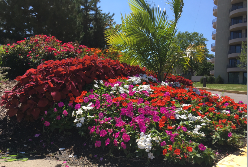 We are proud to have serviced Wheaton Center for many years. Check out this years' flowers – beautiful!