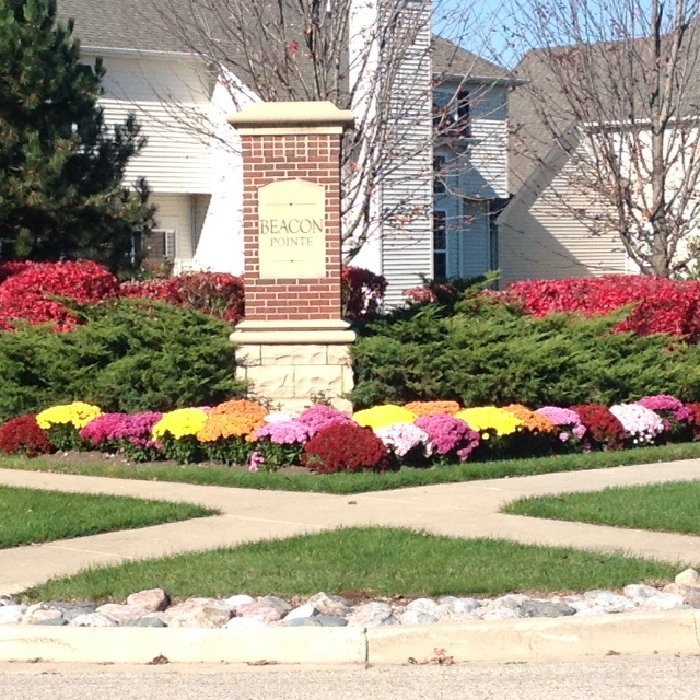 Beacon Pointe Looks Smashing With Their Fall Mums