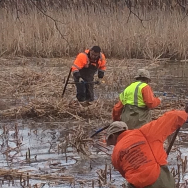 Acres Group Wetland Management