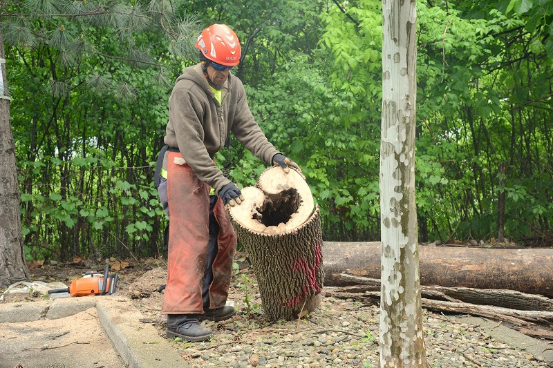 Acres Tree Care Removes Hazard Trees Safely & Efficiently
