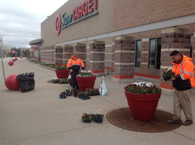 Acres Annual Flowers Are On Target