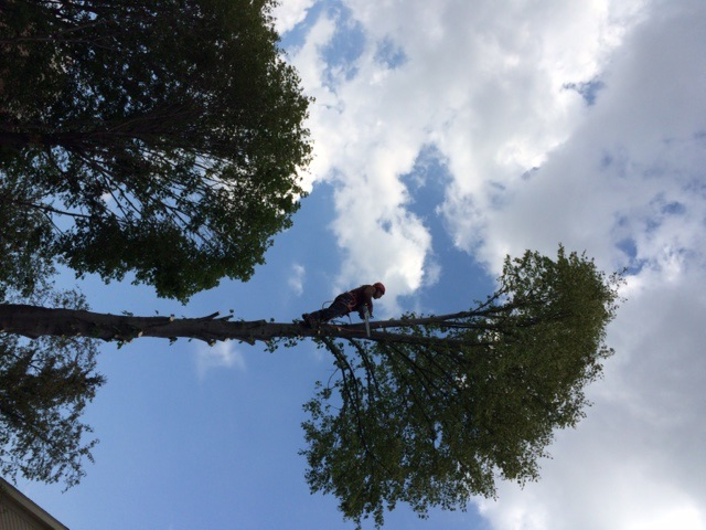 Acres Tree Care – Emergency Services