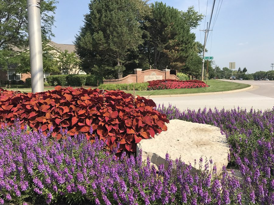 Maple Hill's Route 59 Flowers – Looking Great Even If You're Driving By At 58!